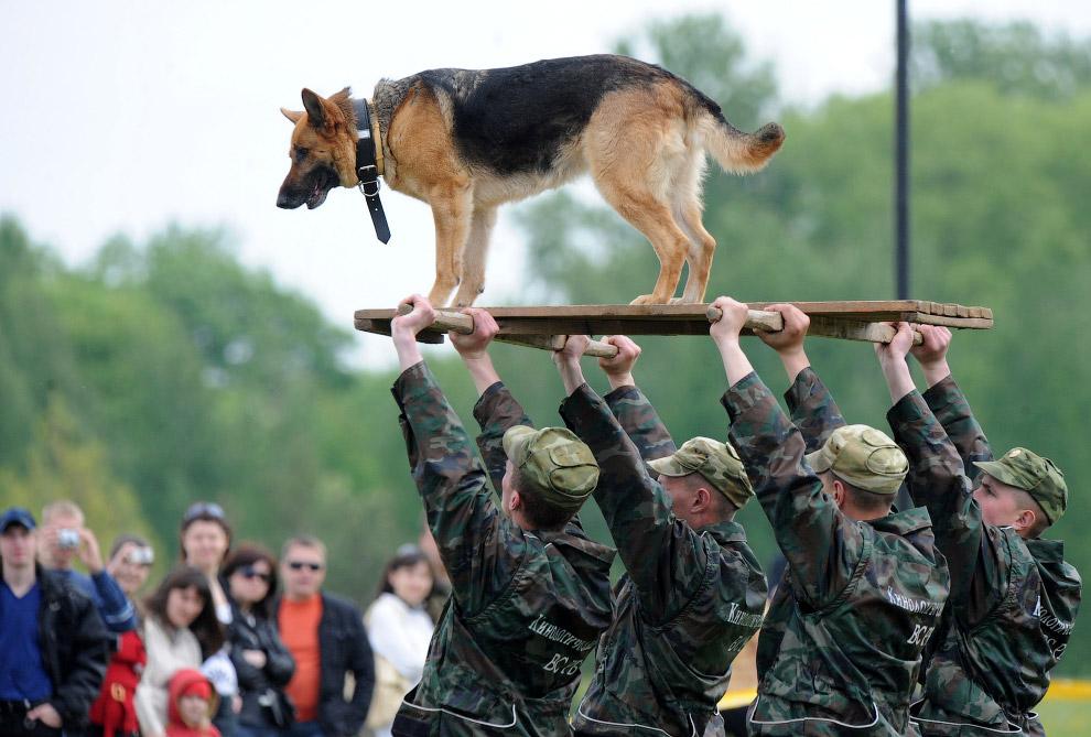 Главный участник выставки – собака-солдат из Белоруссии