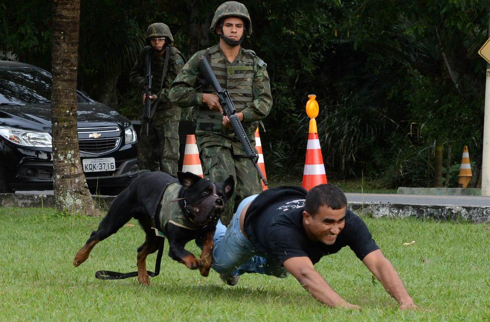 Собаки-борцы с террористами из Рио-де-Жанейро, Бразилия