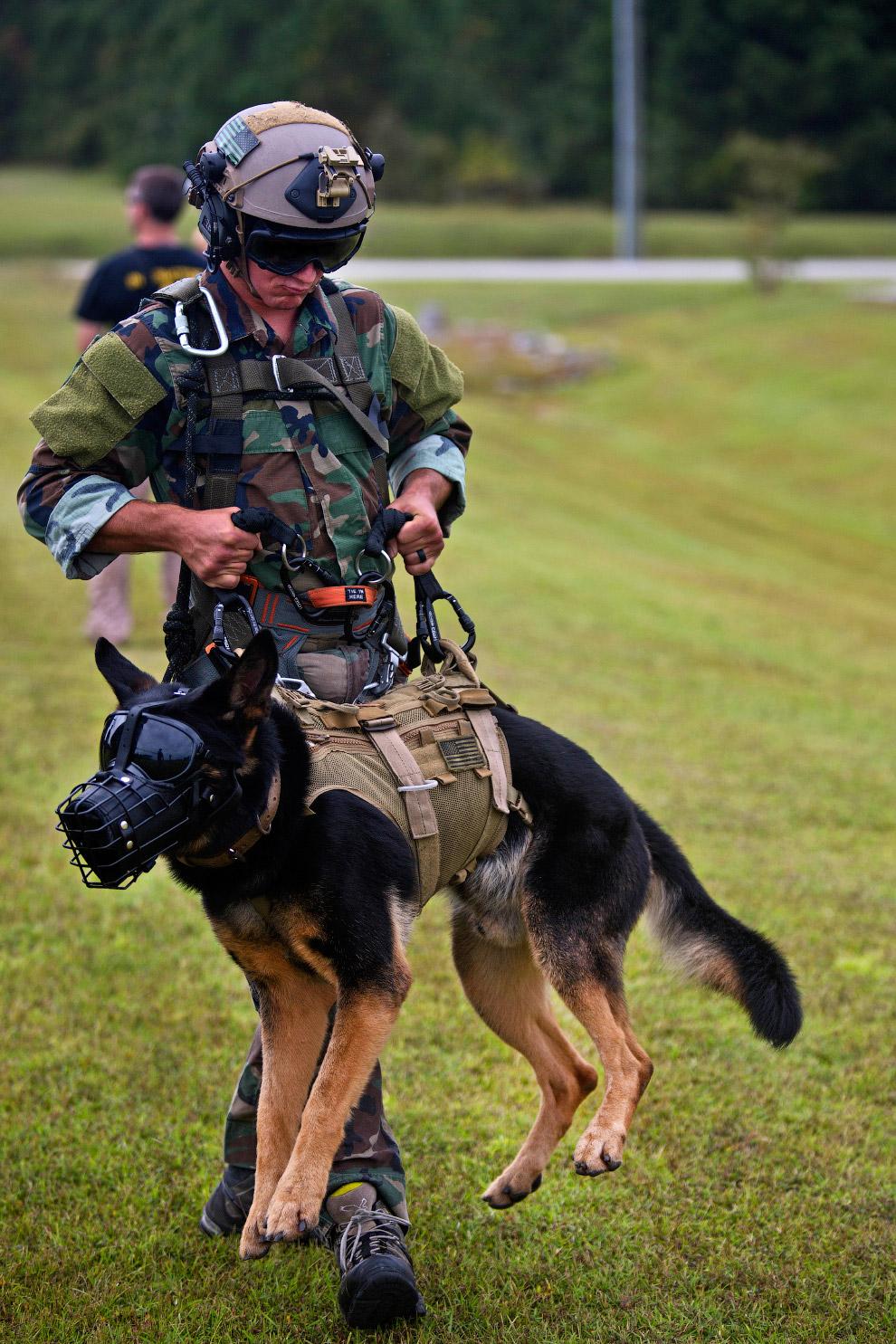 Собаки-морские пехотинцы