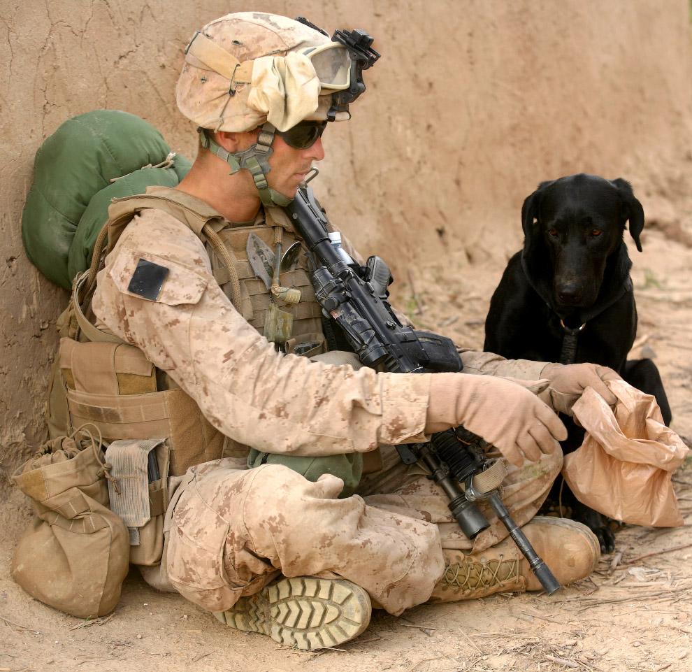 Собака-патрульный в провинции Гильменд, Афганистан
