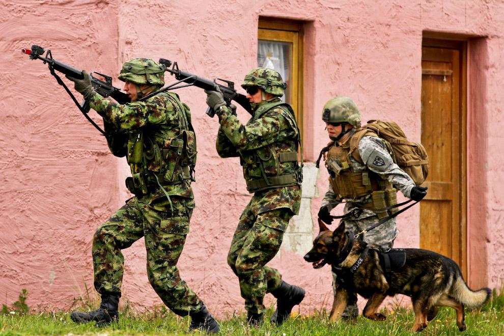 Собака-солдат из Литвы