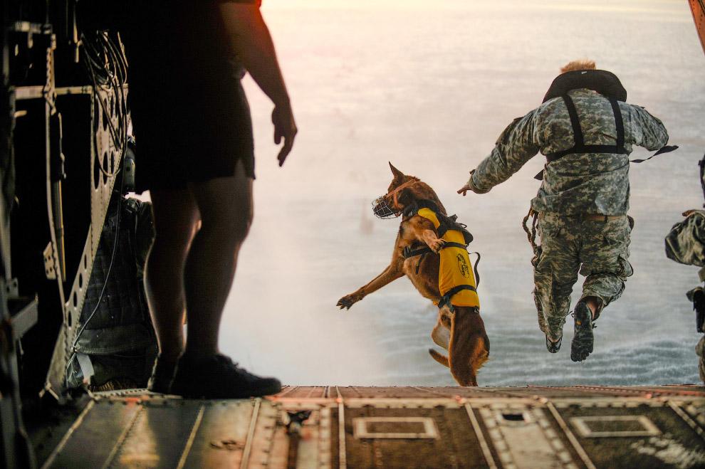 Собака-десантник. Прыжок с самолета