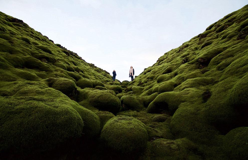 В зеленых мхах Исландии