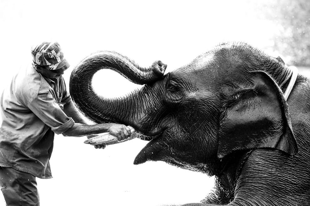 Настоящие друзья, Карнатака, Индия