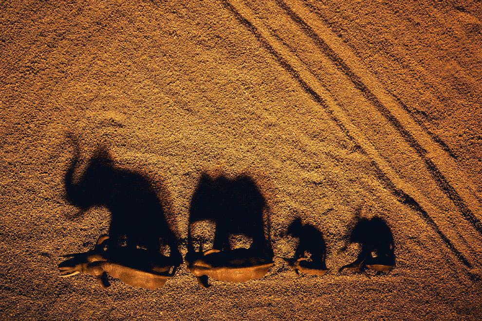 Стадо игрушечных слонов и песочек
