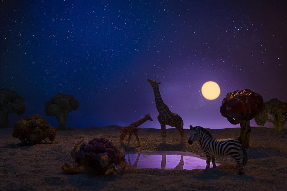 Жирафы и зебра в окружении брокколи и цветной капусты