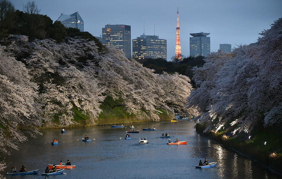 Вид на канал, Токио и цветущие деревья