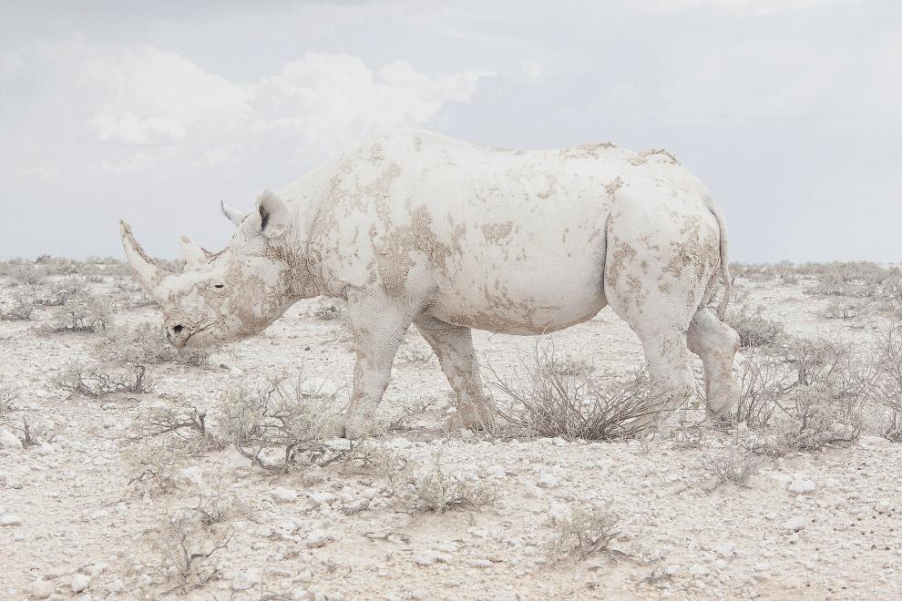 Намибия и носорог
