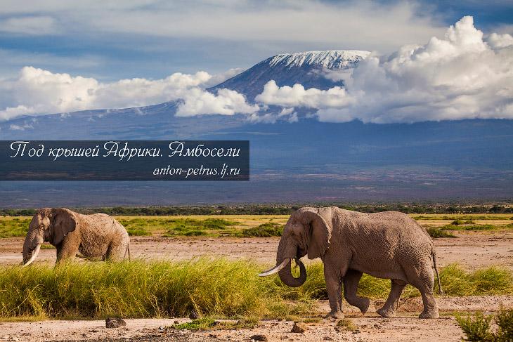 Под крышей Африки: парк Амбосели