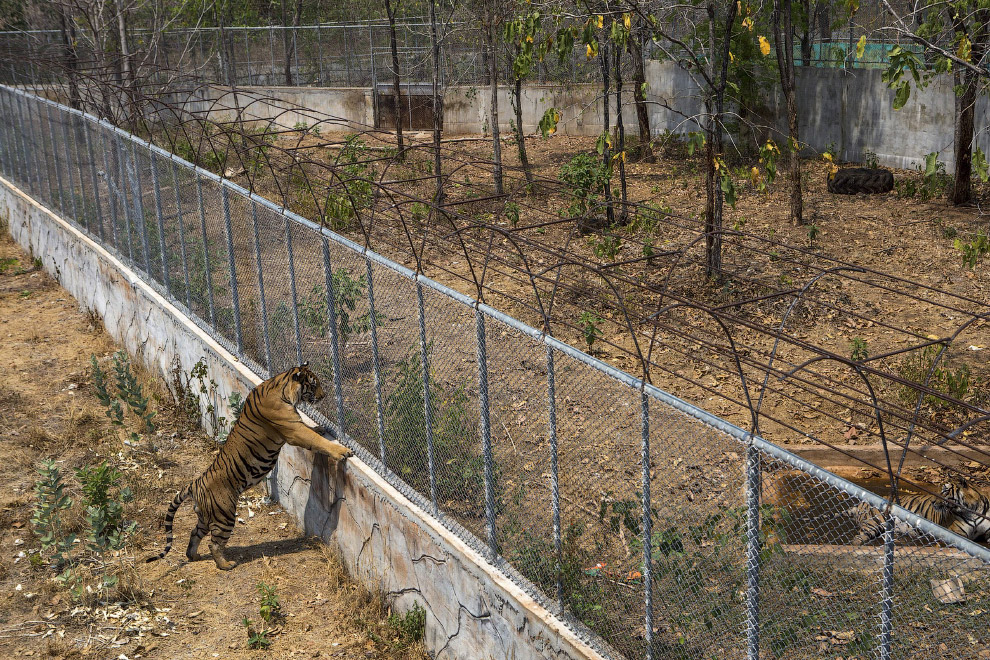Разделенные забором