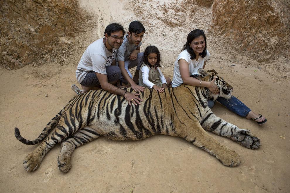Туристы и тигр в Тигрином монастыре