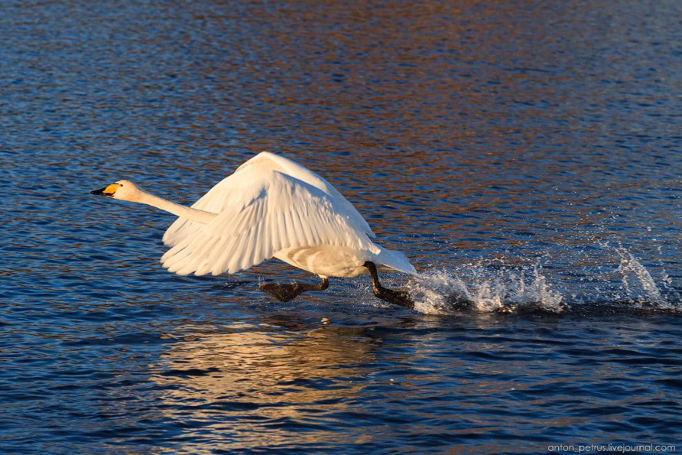 Балет на Лебедином озере