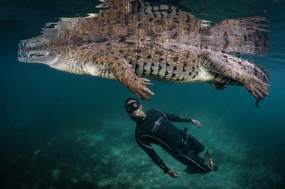 Заплыв с динозавром в мангровых лесах Кубы