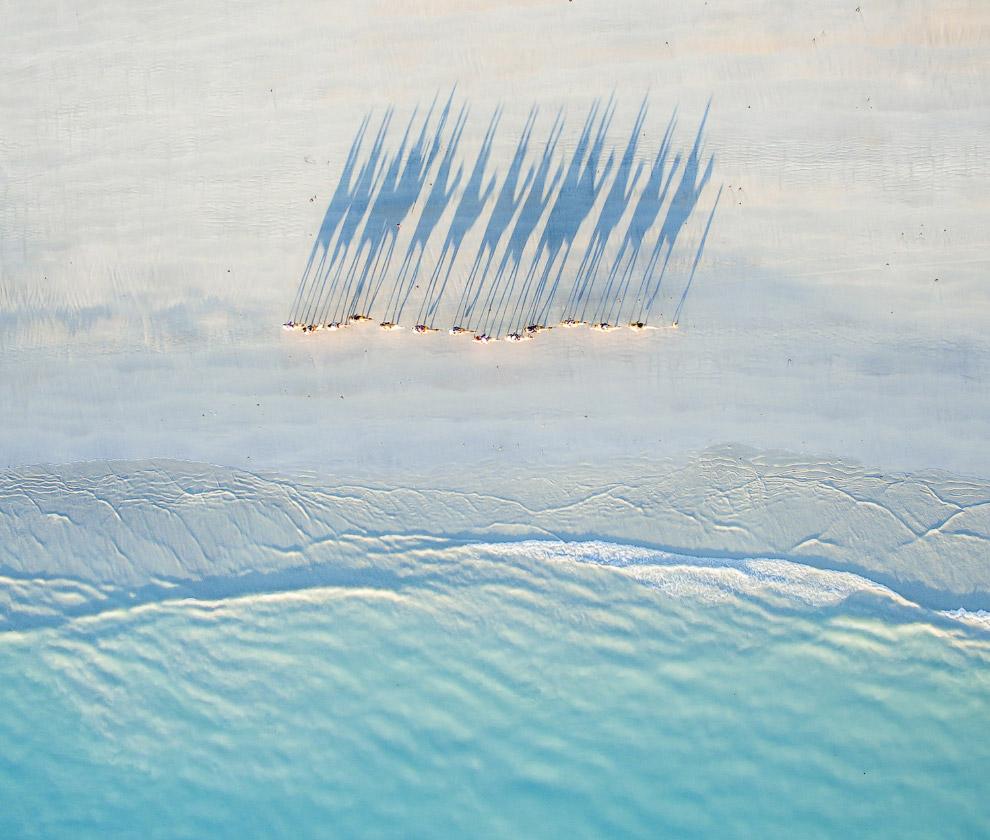 Необычный взгляд на верблюдов с высоты, Западная Австралия