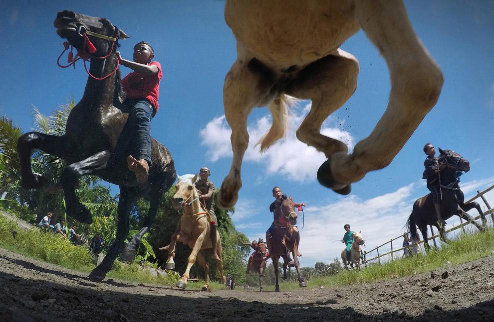 Необычный взгляд на лошадей во время скачек а Индонезии