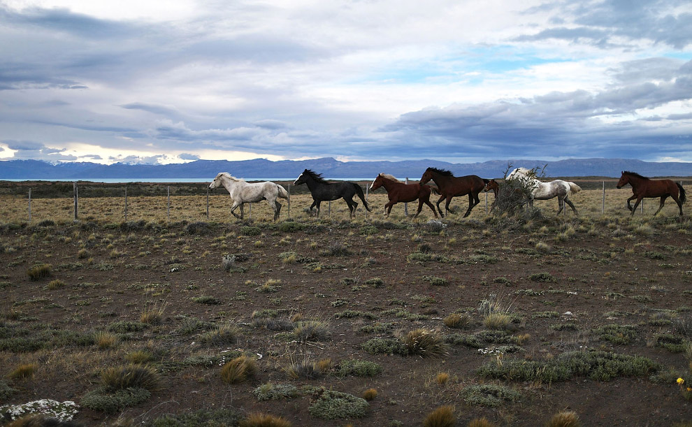 Лошади в провинции Санта-Крус, Аргентина