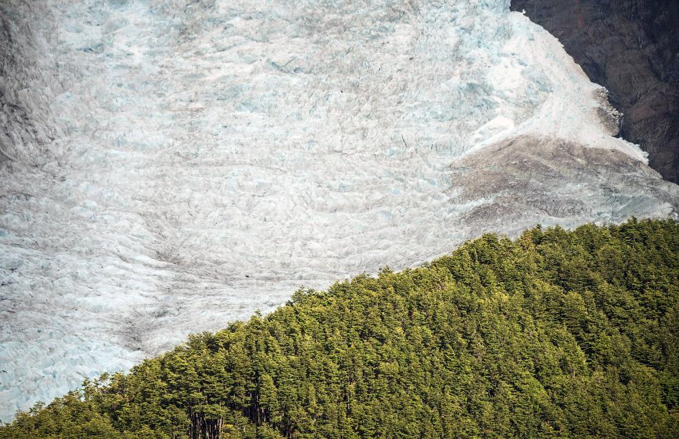 Ледник Серрано и тысячелетний лес