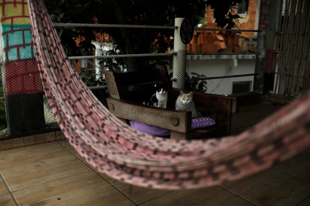 Интерьеры хостела Favelinha и местные котики