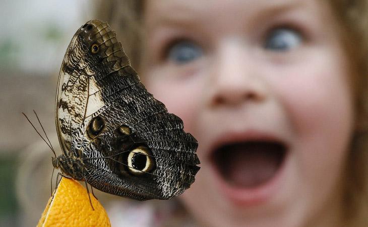 Выставка «Сенсационные бабочки» в Музее естественной истории в Лондоне, 23 марта 2016