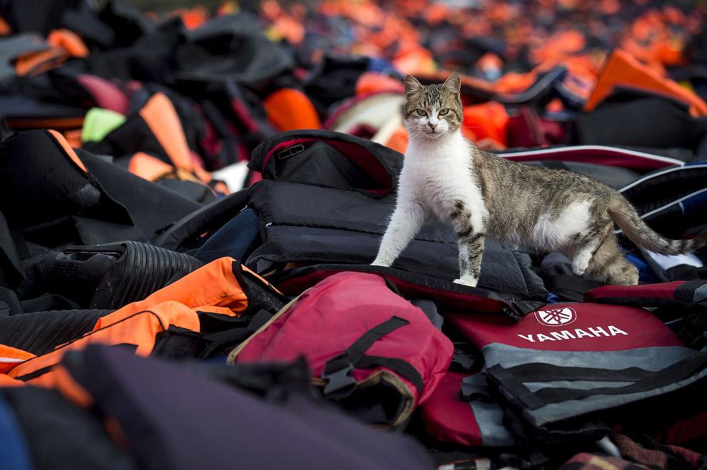 Местный кот исследует вещи прибывших мигрантов из Турции в Лесбос, Греция