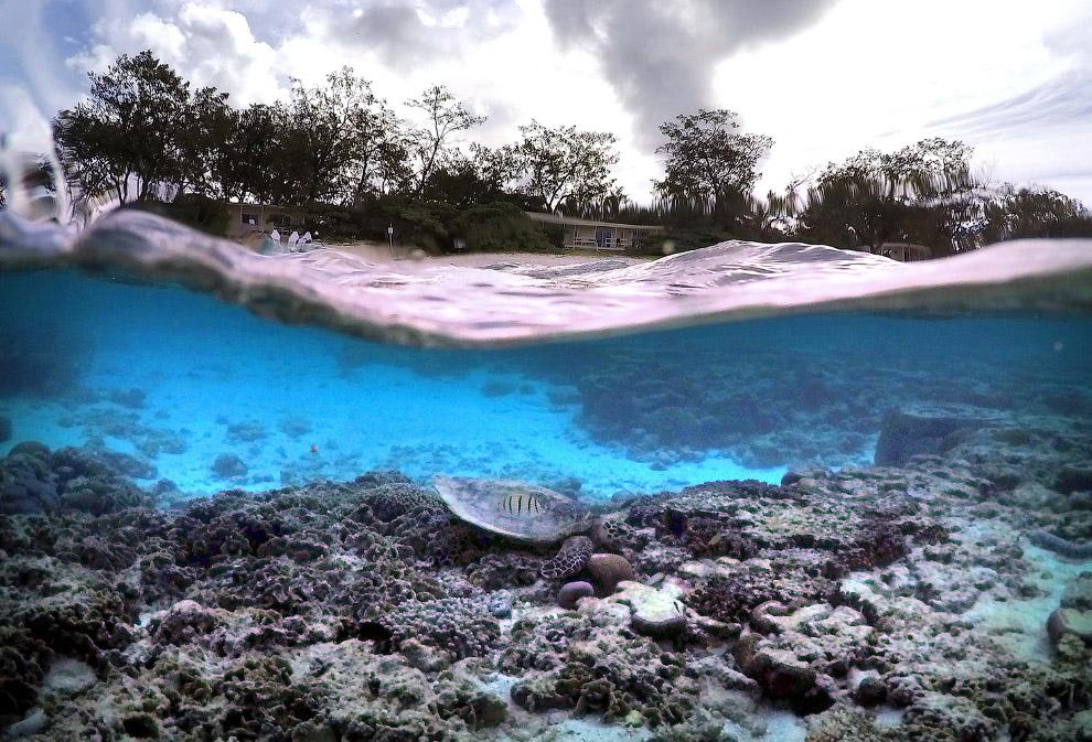 Черепаха на границе двух миров, Австралия