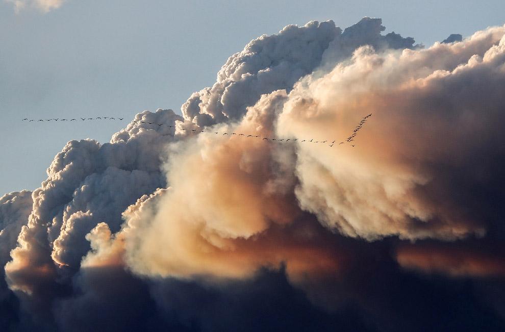 Стая птиц и тучи, Альберта, Канада