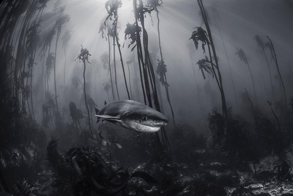 Акула недалеко от Кейптауна, Южная Африка