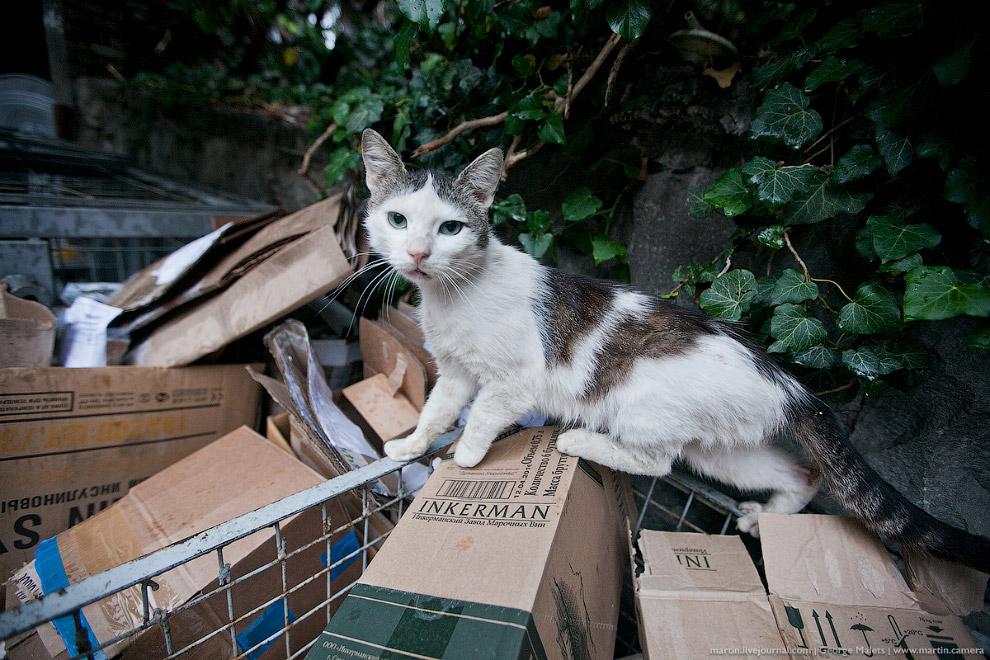 Помойный котик