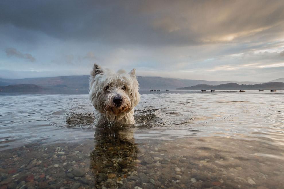 Конкурс собачьей фотографии Kennel Club Dog Photographer 2016