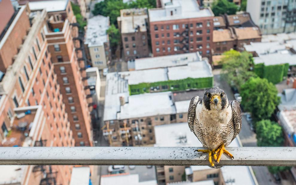 На высоте птичьего полета, Чикаго