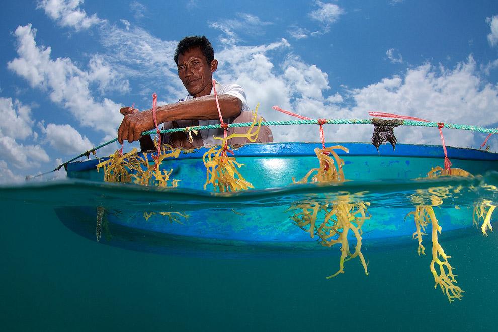 Морское сельское хозяйство и водоросли, Борнео