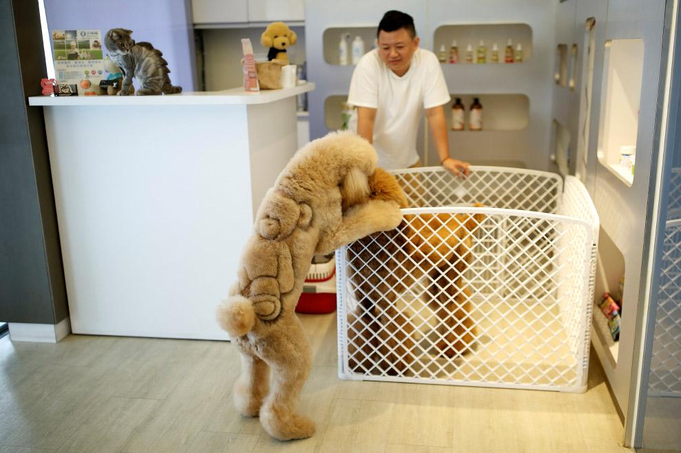 Собака и плюшевый медведь на спине