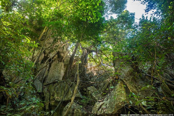 01 Это стоит увидеть своими глазами! Каменный лес Цинги