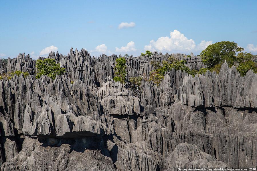 09 Это стоит увидеть своими глазами! Каменный лес Цинги