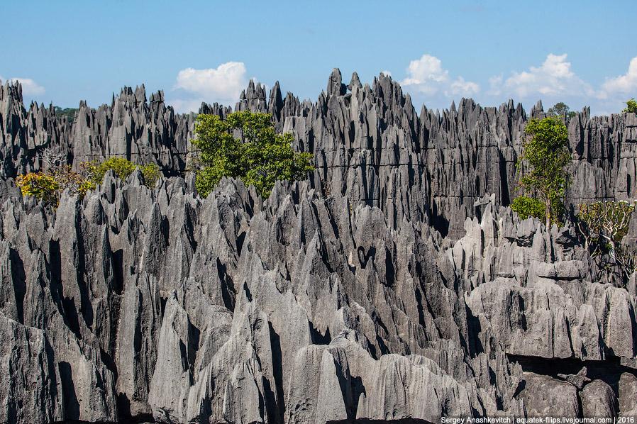 17 Это стоит увидеть своими глазами! Каменный лес Цинги