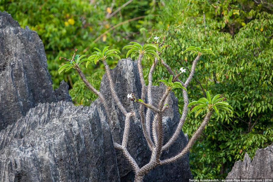 19 Это стоит увидеть своими глазами! Каменный лес Цинги