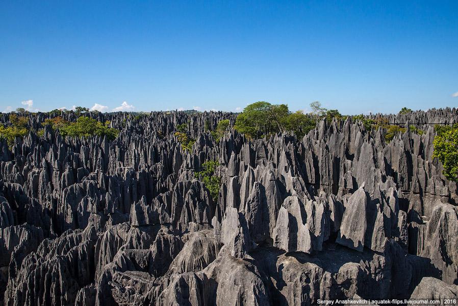 20 Это стоит увидеть своими глазами! Каменный лес Цинги