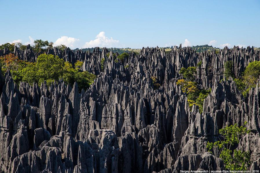 21 Это стоит увидеть своими глазами! Каменный лес Цинги