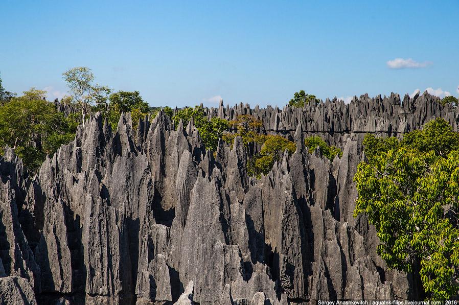 22 Это стоит увидеть своими глазами! Каменный лес Цинги