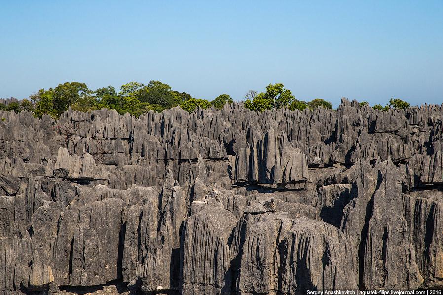 23 Это стоит увидеть своими глазами! Каменный лес Цинги