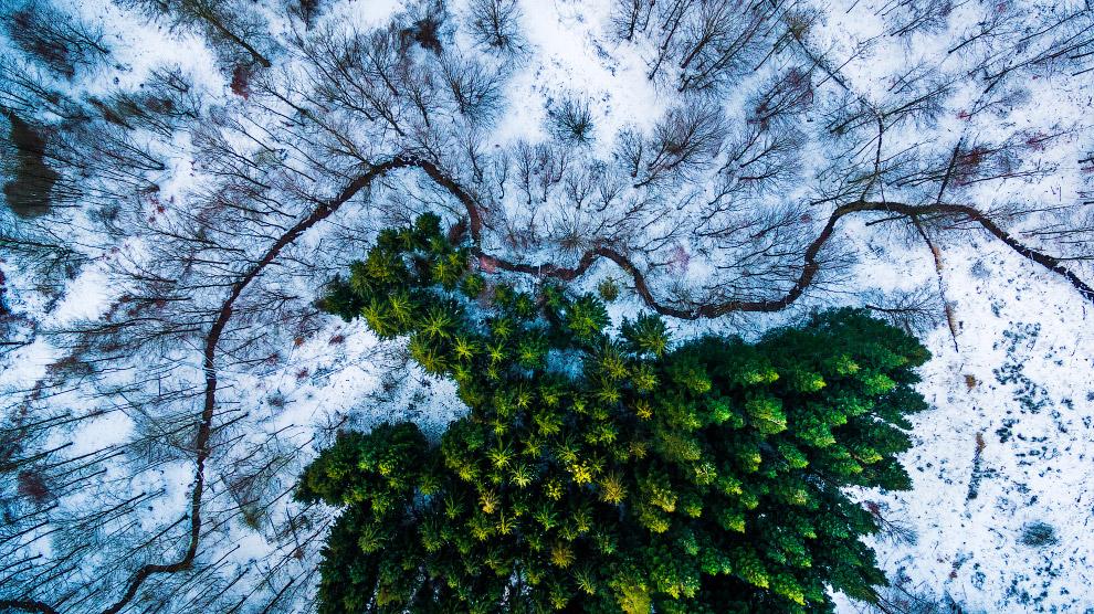 Лес в Дании