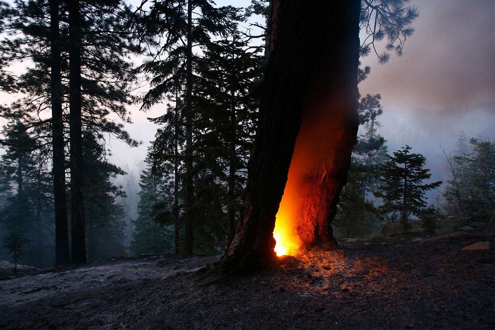 Дупло выгорела