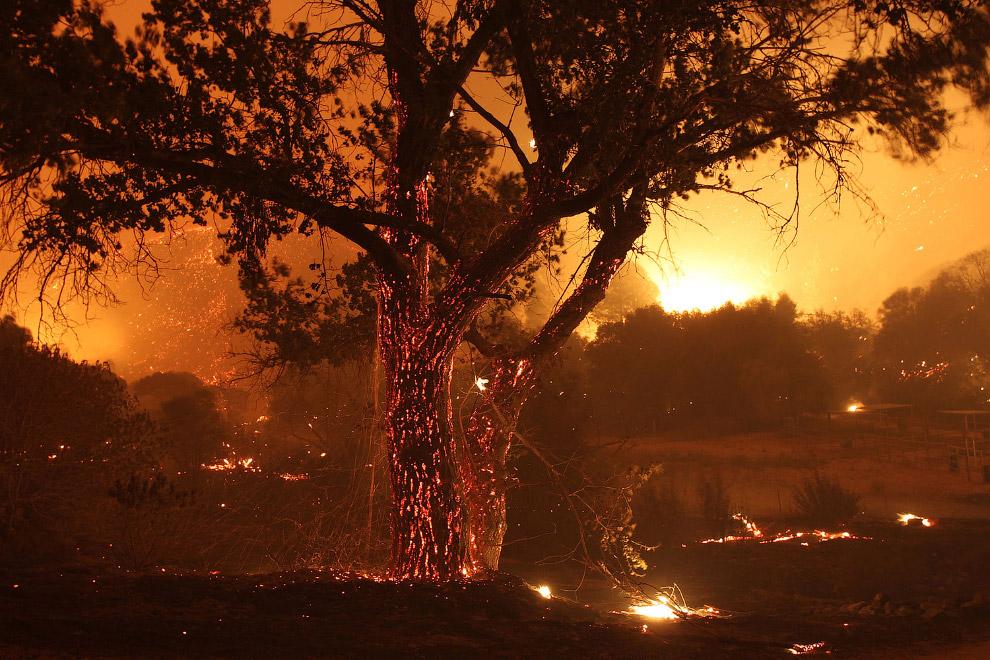 Пейзажи из горящих деревьев