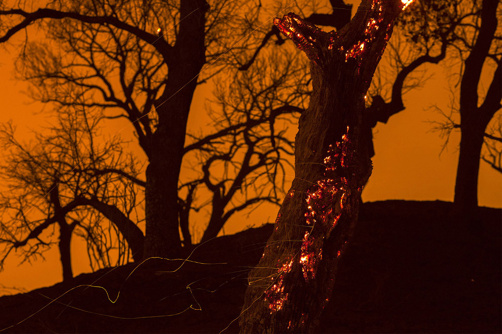 Горящие деревья, Калифорния