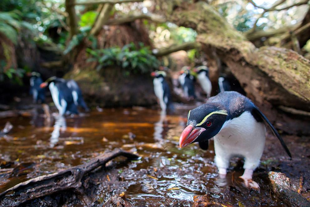 Пингвин-охранник
