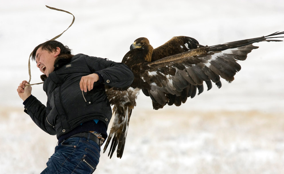 Орел нападает на телеоператора