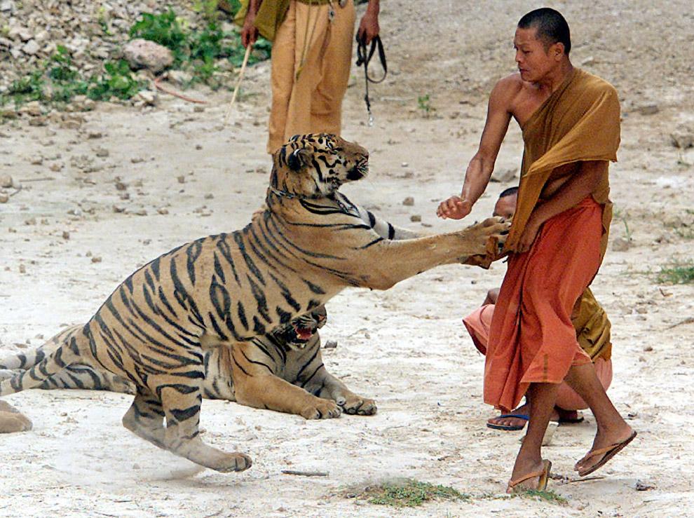 Нападение тигра
