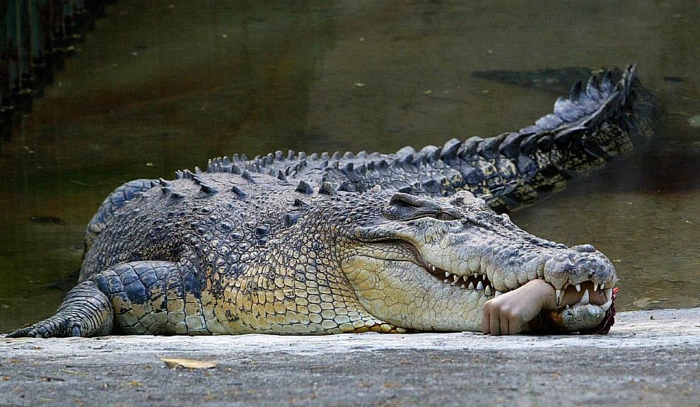 Крокодил откусил руку