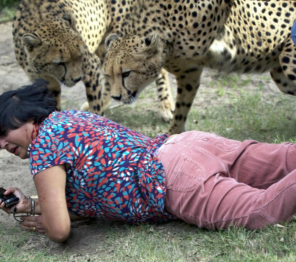 Нападение гепарда