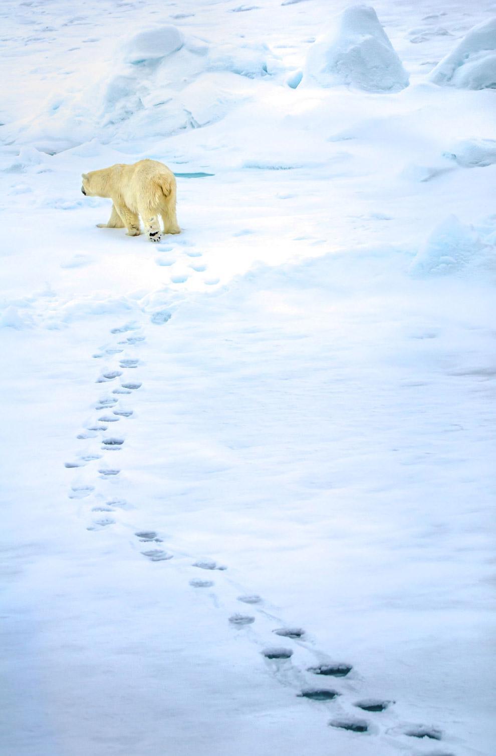 Медвежий путь